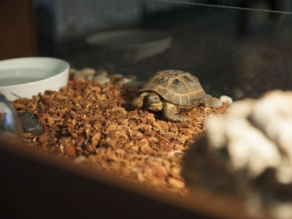 Meet Clyde: Boy's adopted pet, accomplice, paperweight…and possible dinner.