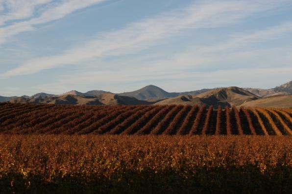 Bridlewood Winery in Santa Barbara