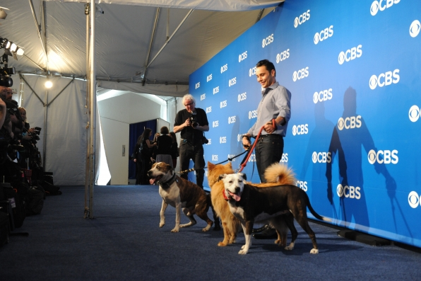 Dogs at the Upfront
