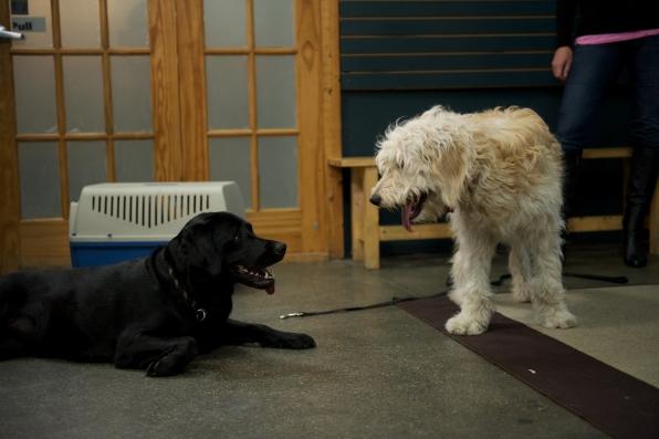 Stella makes a friend