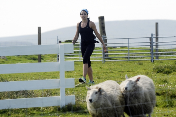 Kym herds sheep