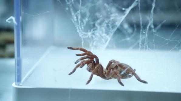 Spider silk screws/framework