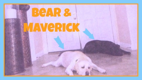 Question: What are the names of Vanessa's dogs? Answer: Bear and Maverick