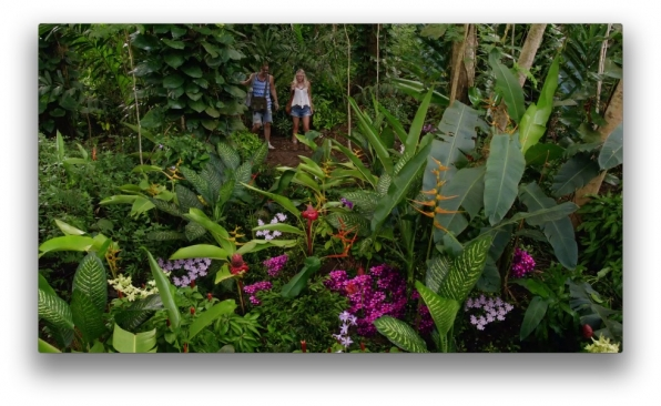 Plants pilfered from the Makua Forest Reserve scene include ginger, coconut, and Tahitian vanilla. Fear not, Five-0 enviros, production purchased the plants used in the show from local nurseries.