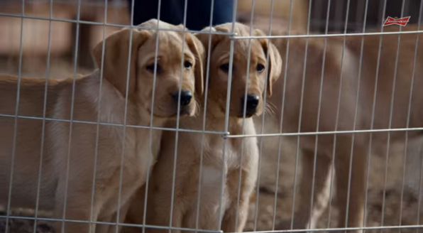 4. Budweiser: Puppy Love