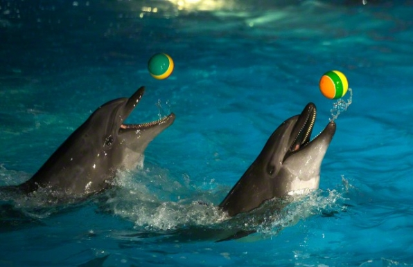No Animals Ball Harder