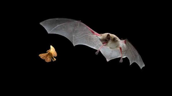 2. Bats can find their food in total darkness.