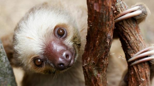 8. Sloth