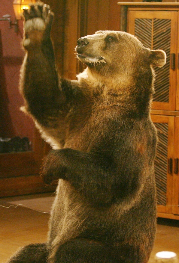 Bear wants honey