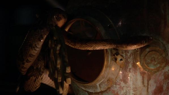 Rattlesnake (Crotalus durissus)