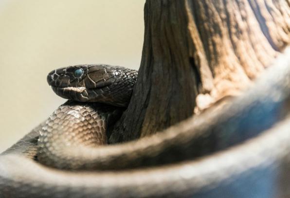 Sinister Snakes