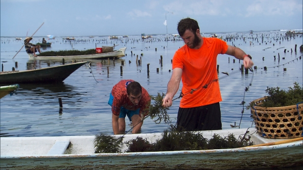 At Detour B, Kurt and Brodie fill baskets with seaweed.