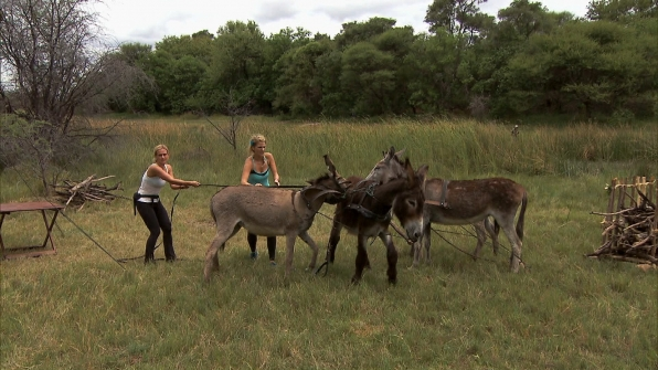 "Coaxing donkeys in ""Be Safe and ""Don't Hit a Cow"" Episode 7 of Season 22"