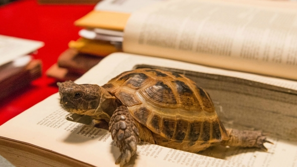 "Fact #13: Naturally, Clyde's favorite book is ""The Tortoise and the Hare."""