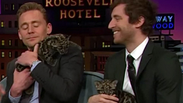International Cat Day With Hiddleston, Middleditch & Baby Leopards