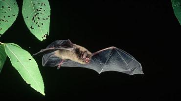 10 Crazy Facts About Bats
