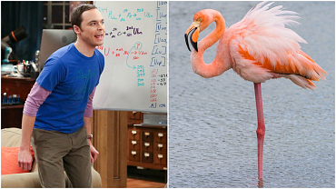 8 Vivid Word Pictures Of Sheldon Cooper, As Told By Sheldon Cooper