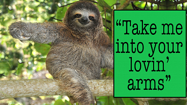 GRAMMY 2016 Song Of The Year Lyrics, As Explained By Baby Animals