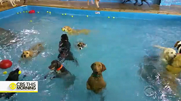 Hilarious dog deadpans in a pool full of playful pups